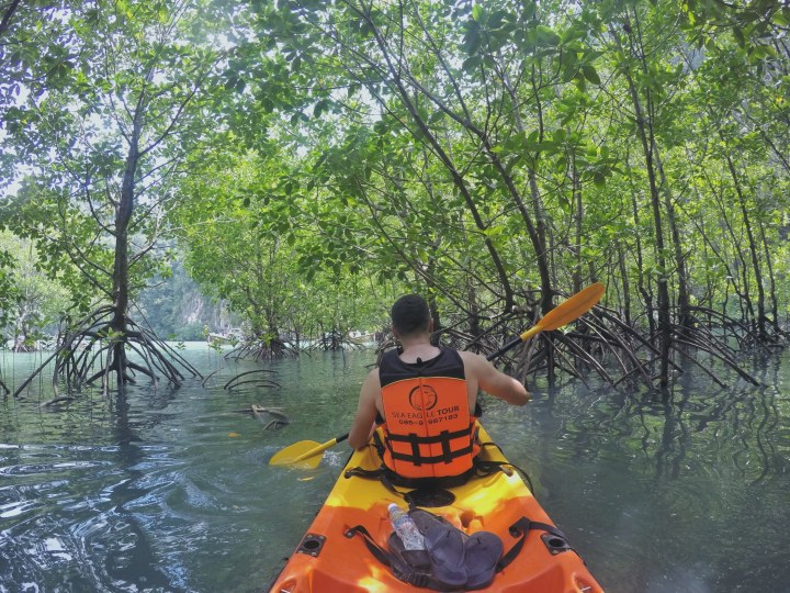 ko hong lagoon krabi thailand mangrove forest kayak