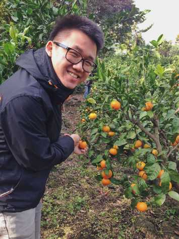 jeju orange south korea