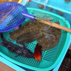 Fresh seafood from the market